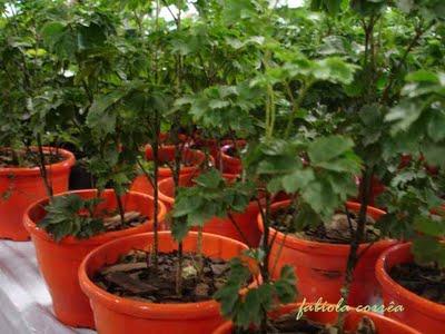 Plantas Da Sorte