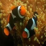 peixes-coloridos-1