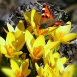 flores_com_borboleta